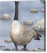 Goose Acrylic Print