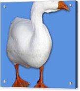 Goose Me Acrylic Print