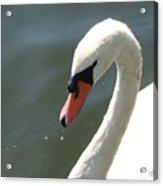 Goose On The Lake Acrylic Print