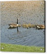 Goose Pond 1 Acrylic Print