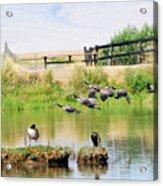 Goose Pond Acrylic Print