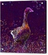 Goose Village Household Farm  Acrylic Print