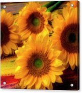 Gorgeous Lovely Sunflowers Acrylic Print