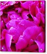 Gorgeous Pink Acrylic Print