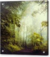 Gorgeous Woods Acrylic Print
