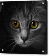 Gorgeous Yellow-green Eyes Cat Acrylic Print