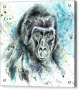 Gorila2 Acrylic Print