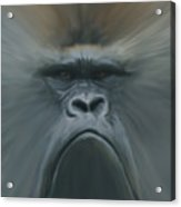 Gorilla Freehand Abstract Acrylic Print