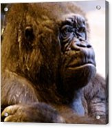 Gorilla Headshot Acrylic Print