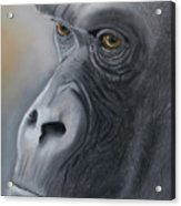 Gorilla Love Acrylic Print