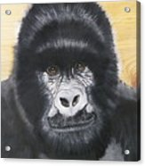 Gorilla On Wood Acrylic Print