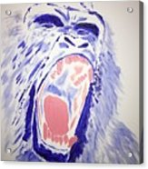 Gorilla Roars Acrylic Print