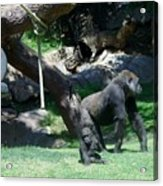 Gorillas Mary Joe Baby And Emonty Mother 7 Acrylic Print