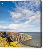 Gorse At Cullernose Point Acrylic Print