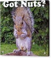 Got Nuts? Acrylic Print