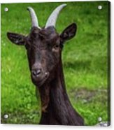 Got Something For Me? Acrylic Print