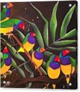 Gouldian Finch Rainbow Acrylic Print
