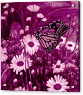 Grace In Pink Acrylic Print