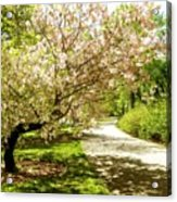 Grace Of Magnolia Acrylic Print