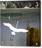 Graceful Acrylic Print