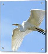 Graceful Flight Acrylic Print