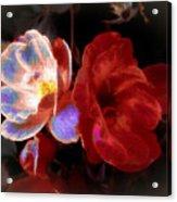 Graceful Glow Acrylic Print