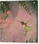 Graceful Hummingbird Acrylic Print
