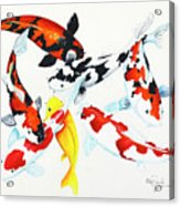 Graceful Koi Acrylic Print
