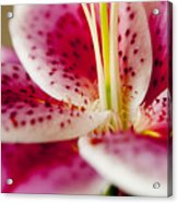 Graceful Lily Series 19 Acrylic Print
