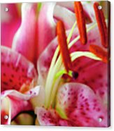 Graceful Lily Series 20 Acrylic Print