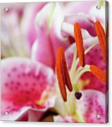 Graceful Lily Series 29 Acrylic Print