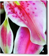 Graceful Lily Series 31 Acrylic Print