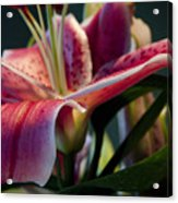 Graceful Lily Series 8 Acrylic Print