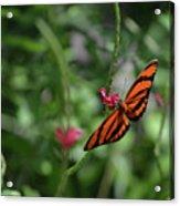 Graceful Oak Tiger Butterfly Around Pink Flowers Acrylic Print