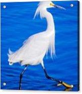 Graceland Acrylic Print