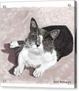 Gracie Jacks Cat Now Acrylic Print