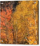 Grafton Notch Foliage Acrylic Print