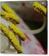 Grains Of Pollen Acrylic Print