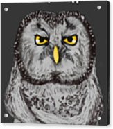 Grammar Owl Is Judging You Acrylic Print