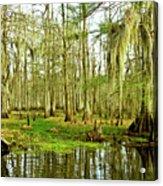 Grand Bayou Swamp Acrylic Print