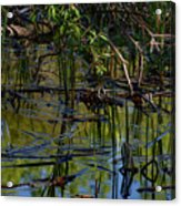 Grand Beach Marsh Acrylic Print