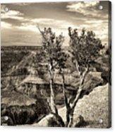 Grand Canyon Lone Tree Acrylic Print