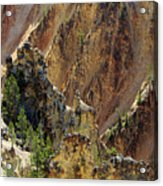 Grand Canyon Of The Yellowstone From North Rim Drive Acrylic Print