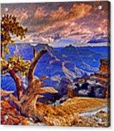 Grand Canyon Pine Acrylic Print
