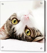 Grand Kitty Cuteness Acrylic Print by Andee Design