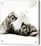 Grand Kitty Cuteness Bw Acrylic Print by Andee Design