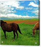 Grand-pre Horses Acrylic Print