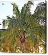 Grand Turk Palms On The Beach Acrylic Print