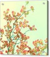 Grandma's Pink Dogwood Acrylic Print