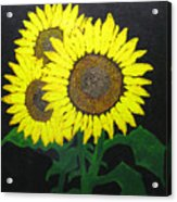 Grandmas Sunflowers Acrylic Print
